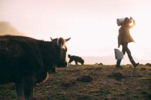 Milch und Milchprodukte führen häufig zu Unverträglichkeitssymptomen