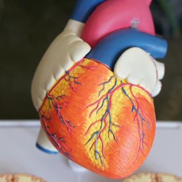 Gesunde Blutgefäße ein Leben lang – oder: Du bist, was du NICHT isst!