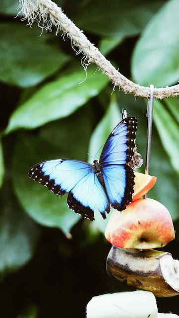 Schilddrüse hat Schmetterlingsform